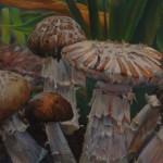 Mullett Mushrooms