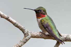 Photo credit: birds.audubon.org