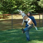 Wellness Dog show