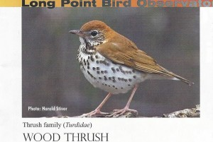 Photo courtesy of Long Point Bird Observatory Tom will guide a canoe trip on Howe Reservoir on June 12 at 7:30 pm to listen to the songs of the Wood Thrush, Hermit Thrush and Veery. Call 563-7194 for details.